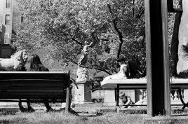 zev fagin, photograph 82