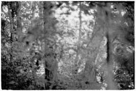 zev fagin, photograph 13